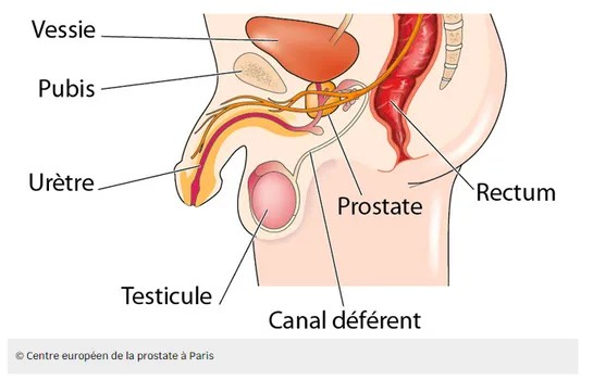 Petit Tuto guide sur la stimulation de la prostate et du point P